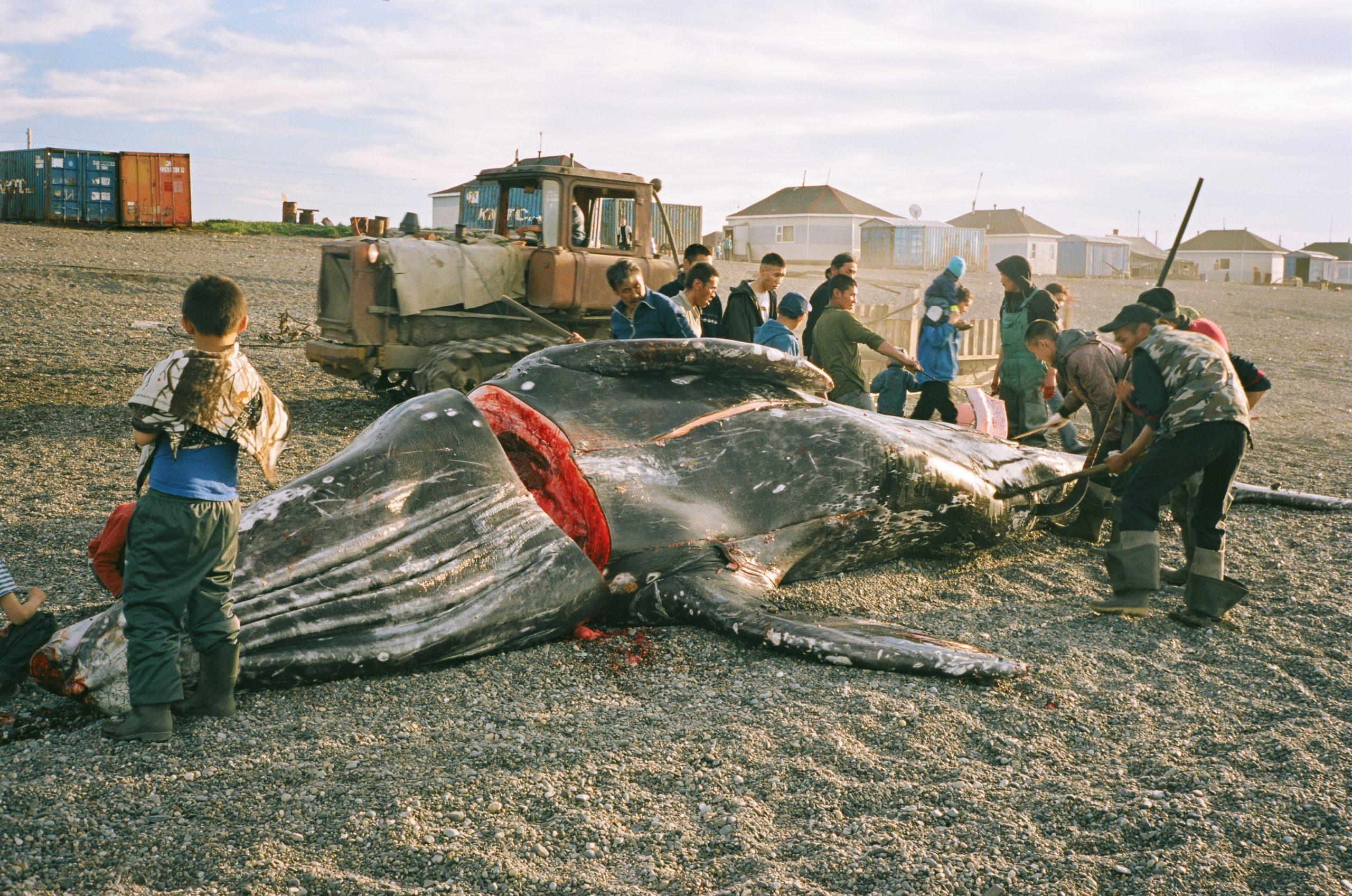 Wieloryb z Lorino | Teraz–wtedy