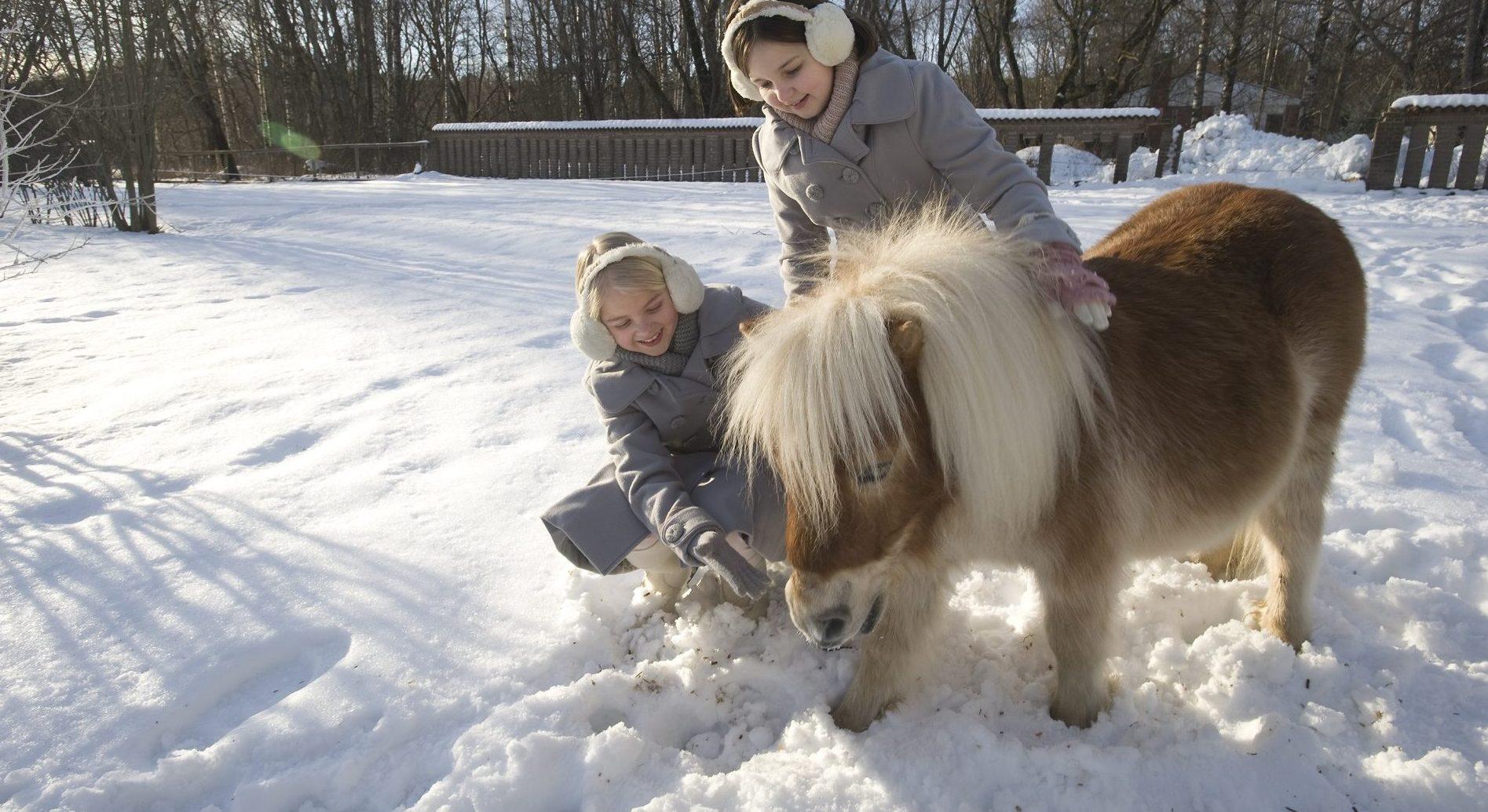 Zimowe przygody Jill i Joy | Filmoniada online